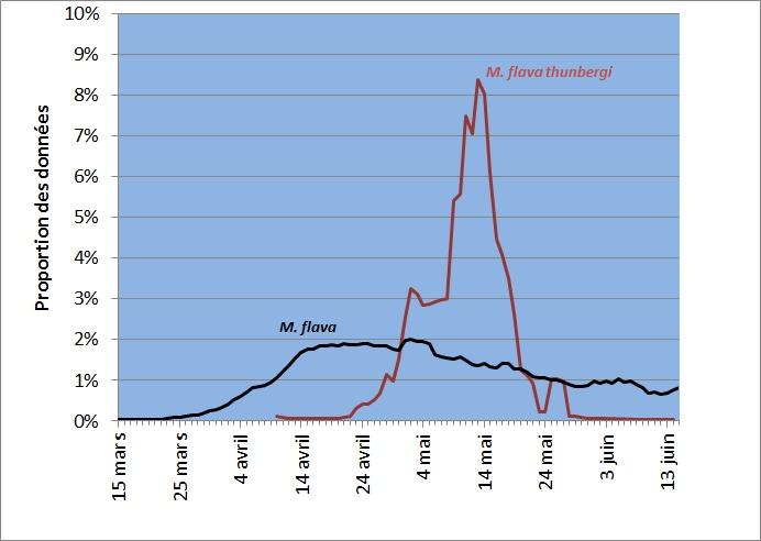 Proportion journalière des observations printanières de Bergeronnettes printanières en Wallonie (période 1990-2015). Sources:Banque Ornithologique Aves _ Observations.be - OFFH