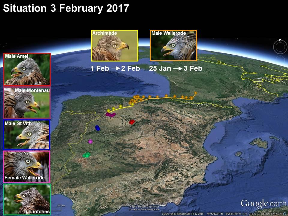 Situation au 3 février 2017. On voit les trajets d'Archimède et de Mâle Wallerode, et les positions en hivernage des 5 autres individus suivis, depuis Mérida au sud, jusqu'à Zamora.