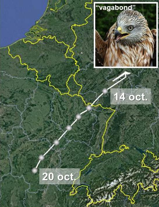 """Trajet migratoire du """"Vagabond"""", depuis son départ de la région de Francfort le 14 octobre au 20 octobre."""