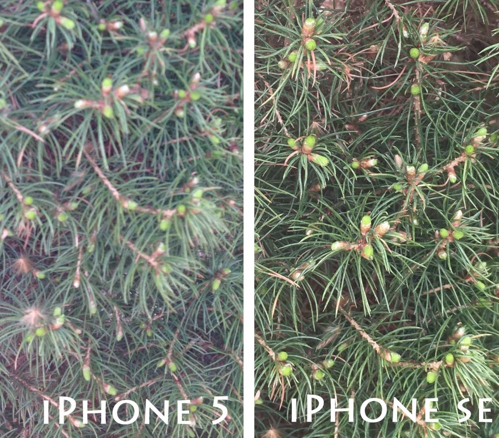 iphone 5 vs iphone se camera comparison