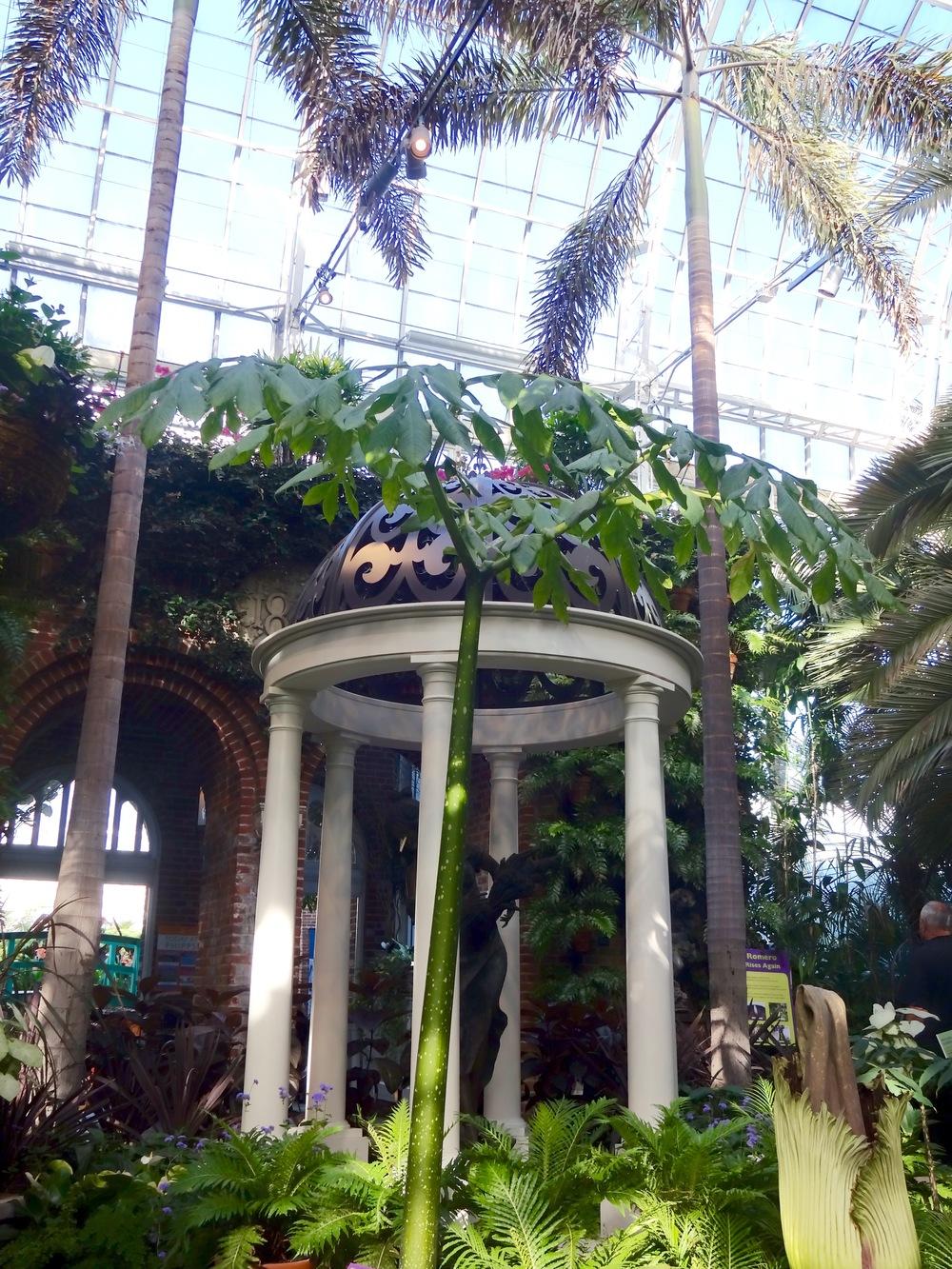 Romero Corpse Flower, Phipps Conservatory, Pittsburgh - M.Quigley
