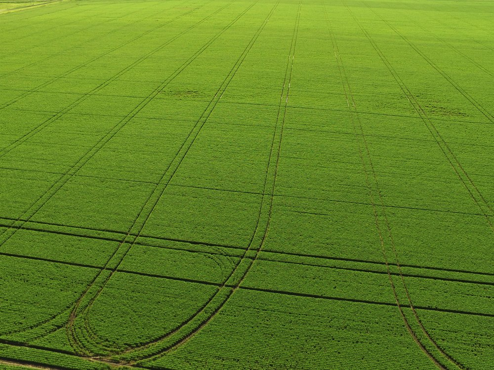 Soybeans located near Winnipeg, Manitoba in mid-July