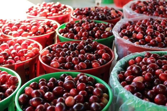 Fresh cranberries at the  Jean-Talon Market , Montréal