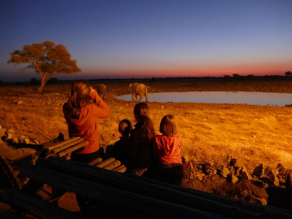 Observation de soir des animaux.