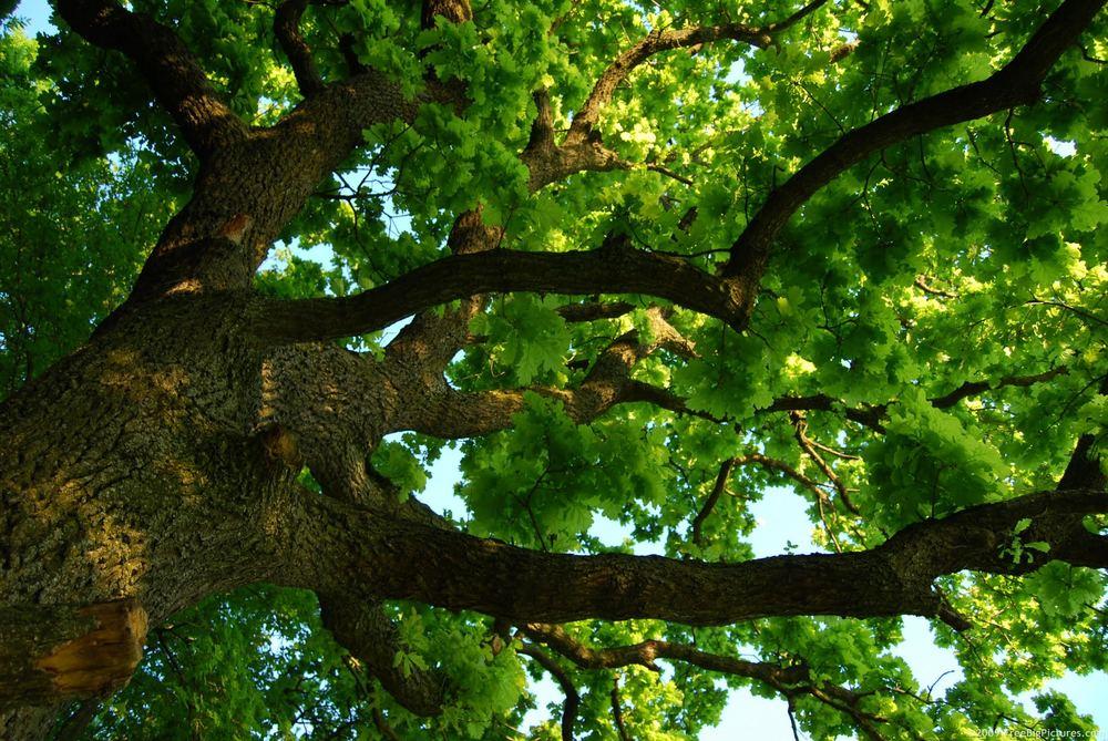 oakproject.jpg