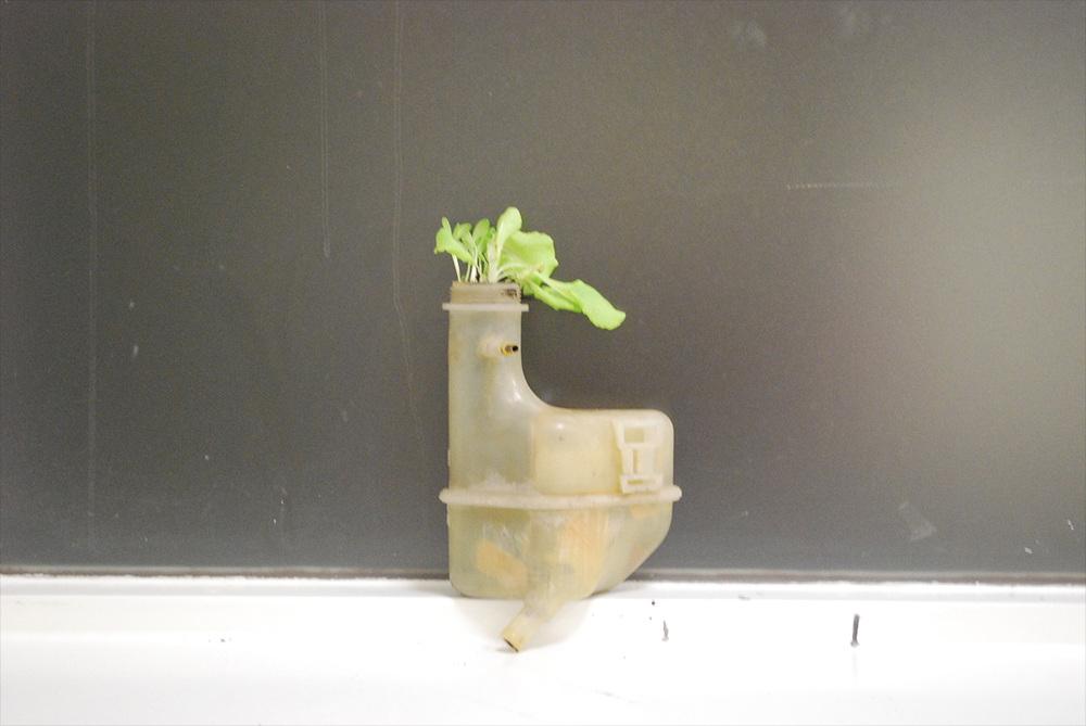 carplant.jpg