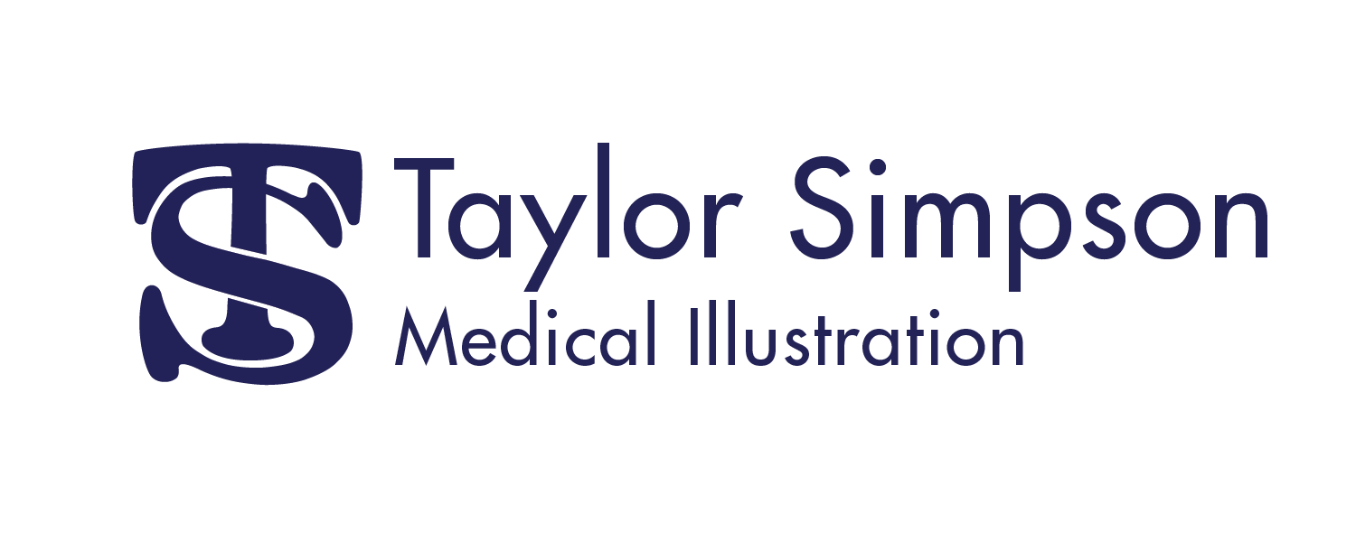 Taylor Simpson Medical Illustration