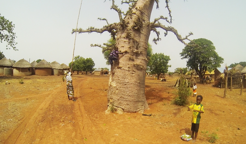 Bognayili, Ghana, Africa