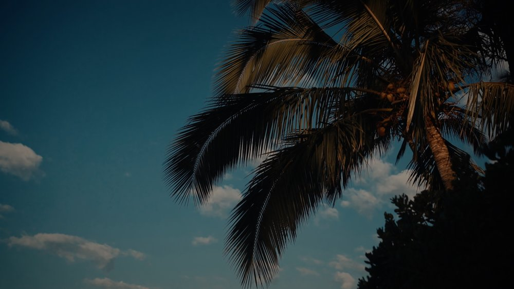 VMC-Palms-04-HD STILL-0.jpg