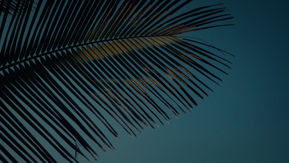 VMC-Palms-06-HD STILL-0.jpg