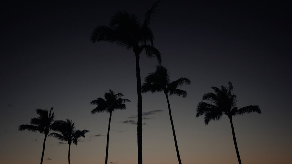 VMC-Palms-08-HD STILL-0.jpg
