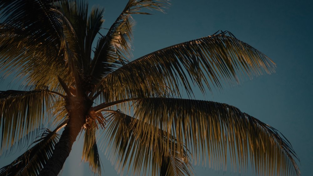 VMC-Palms-09-HD STILL-0.jpg