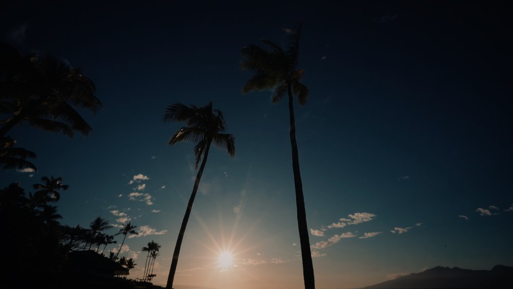 VMC-Palms-12-HD STILL-0.jpg