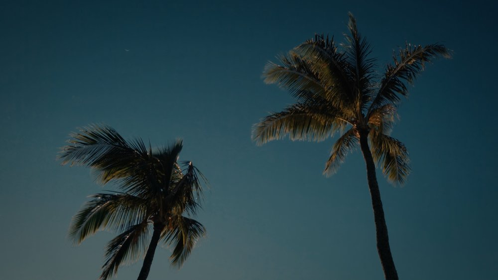 VMC-Palms-11-HD STILL-0.jpg