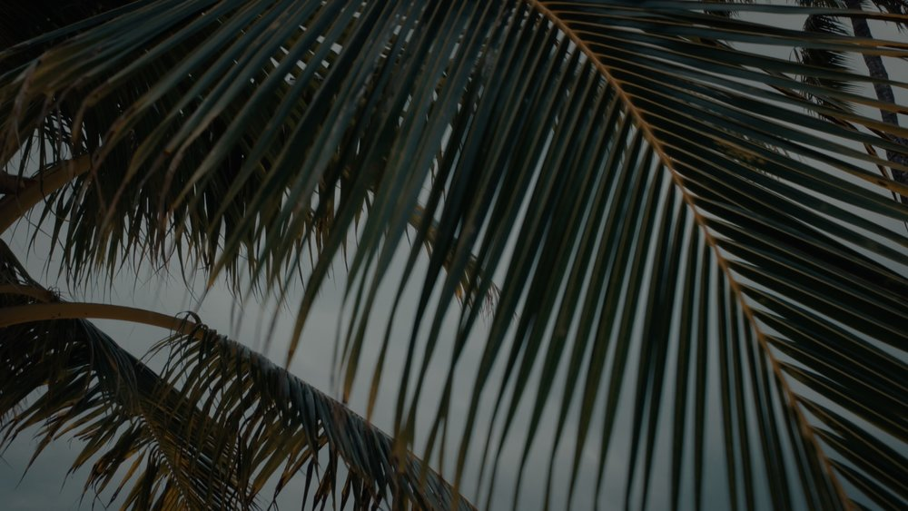 VMC-Palms-13-HD STILL-0.jpg
