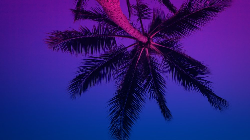 VMC-Palms-Remix-02-HD STILL-0.jpg