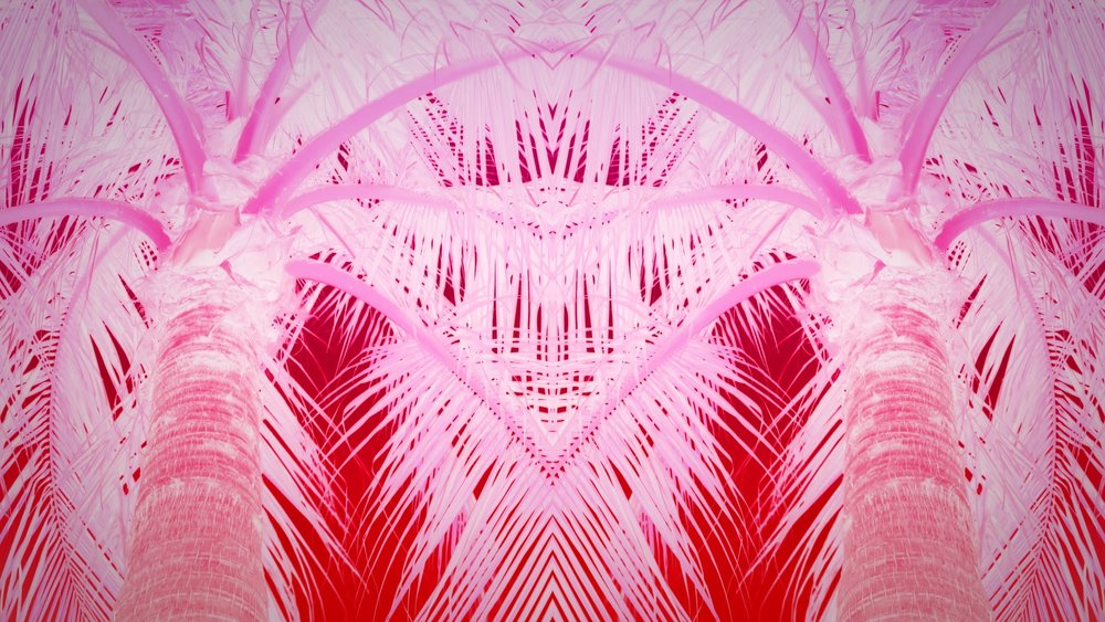 VMC-Palms-Remix-15-HD STILL-0.jpg