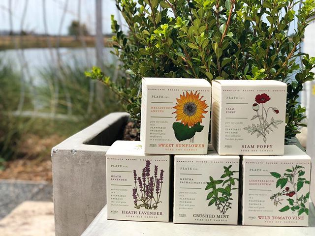 Pure soy candles in a plantable package #canvasmarketgoods #kobocandles #spring #plantable