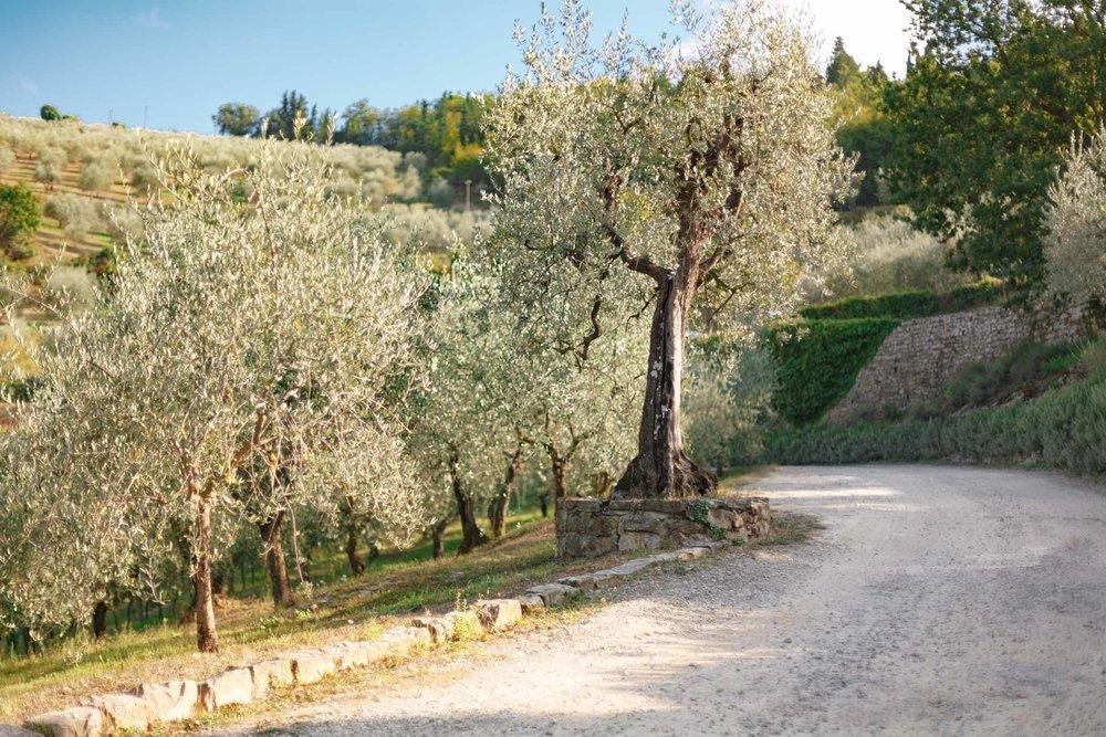 tuscany-3630.jpg