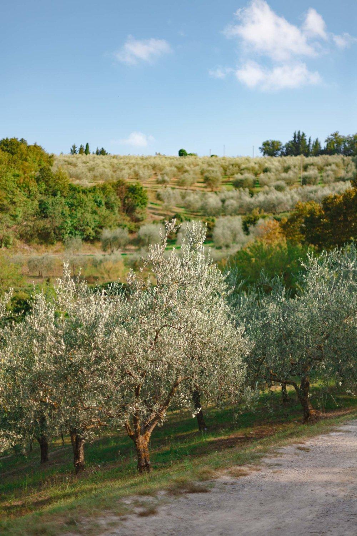 tuscany-3642.jpg