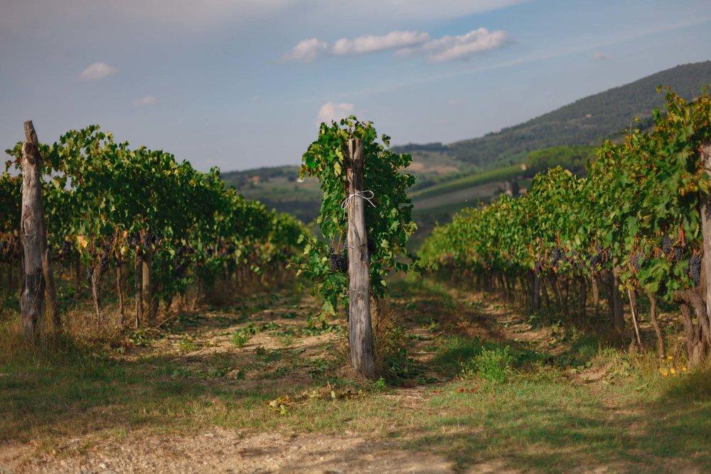tuscany-3677.jpg