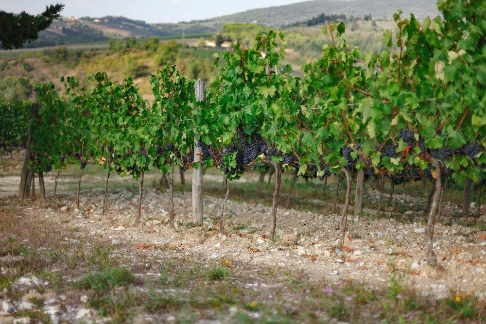 tuscany-3713.jpg