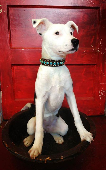 Paco Collar w Dog.jpg