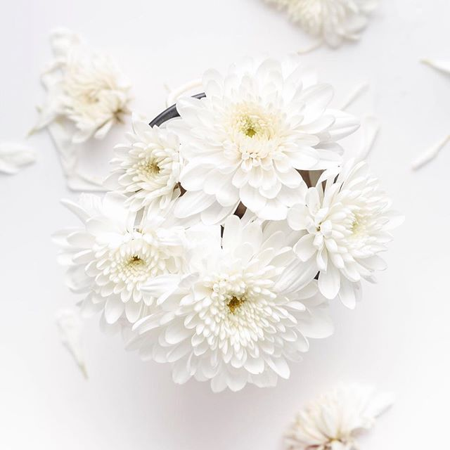 April (snow) showers bring May flowers 🌸 . . . #lovewhereyoulive #spring #flowers #white #blankspace #simplicity #design