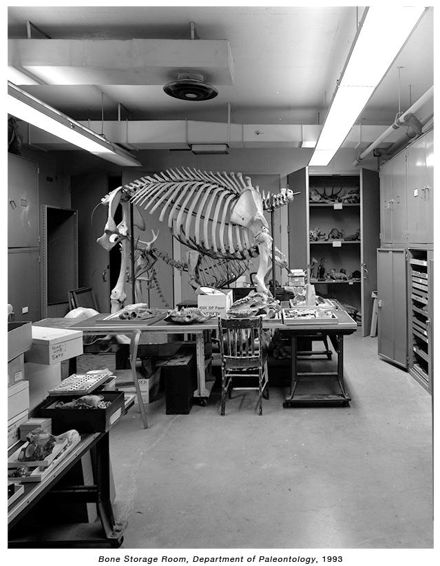 Bone Storage.jpg