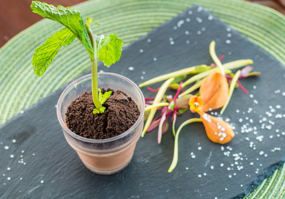 Potted plant dessert of mint infused chocolate milk puddings with oreo dust.