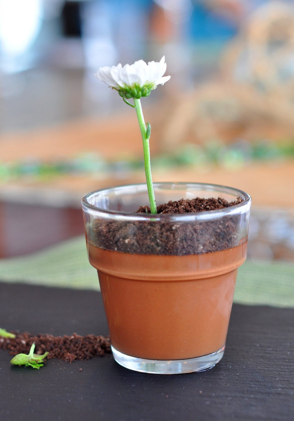 Flower pot chocolate mint-infused pudding with oreo dust.
