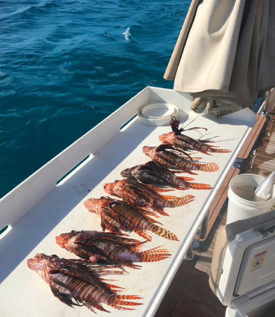 Bahamas-Abacos-Fish-Lionfish.jpg
