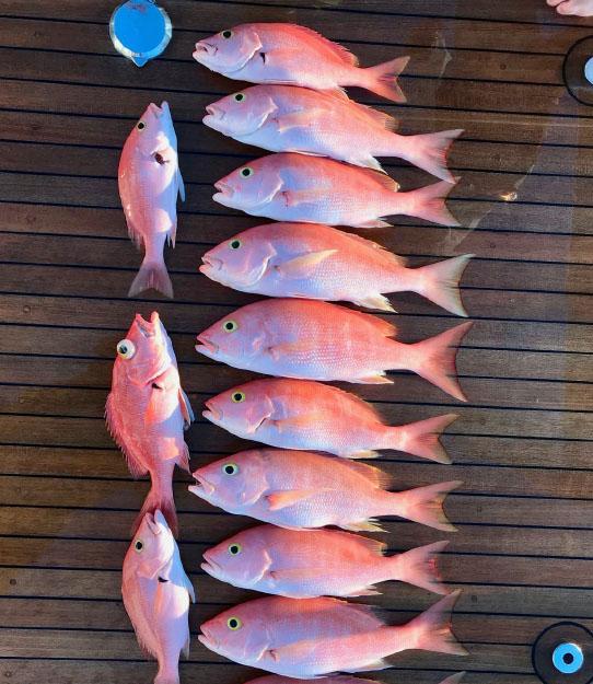 Bahamas-Exumas-Fish-Yellow-Eye-Snapper.jpg