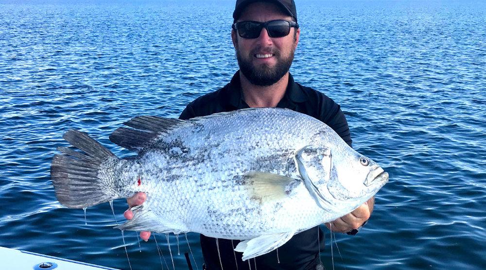 Central-America-Belize-Fish-Tripletail.jpg