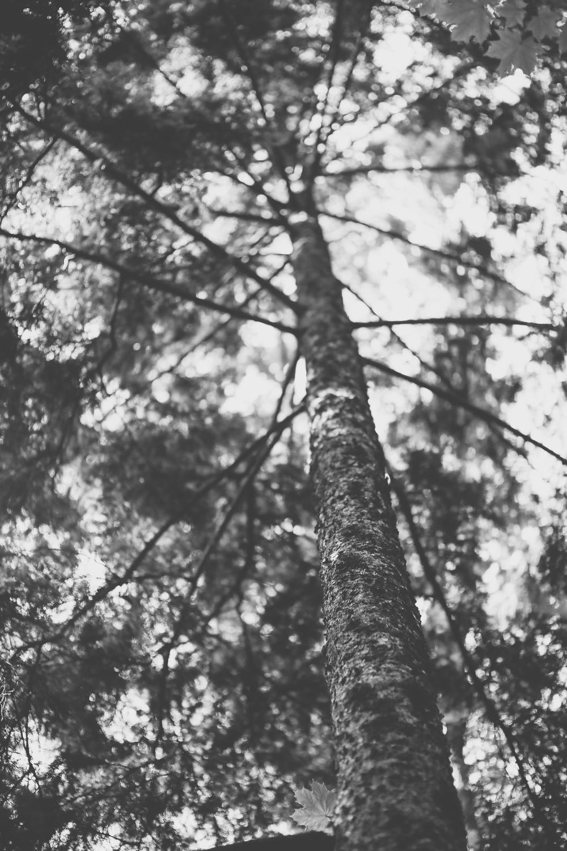 kaboompics.com_Tree.jpg