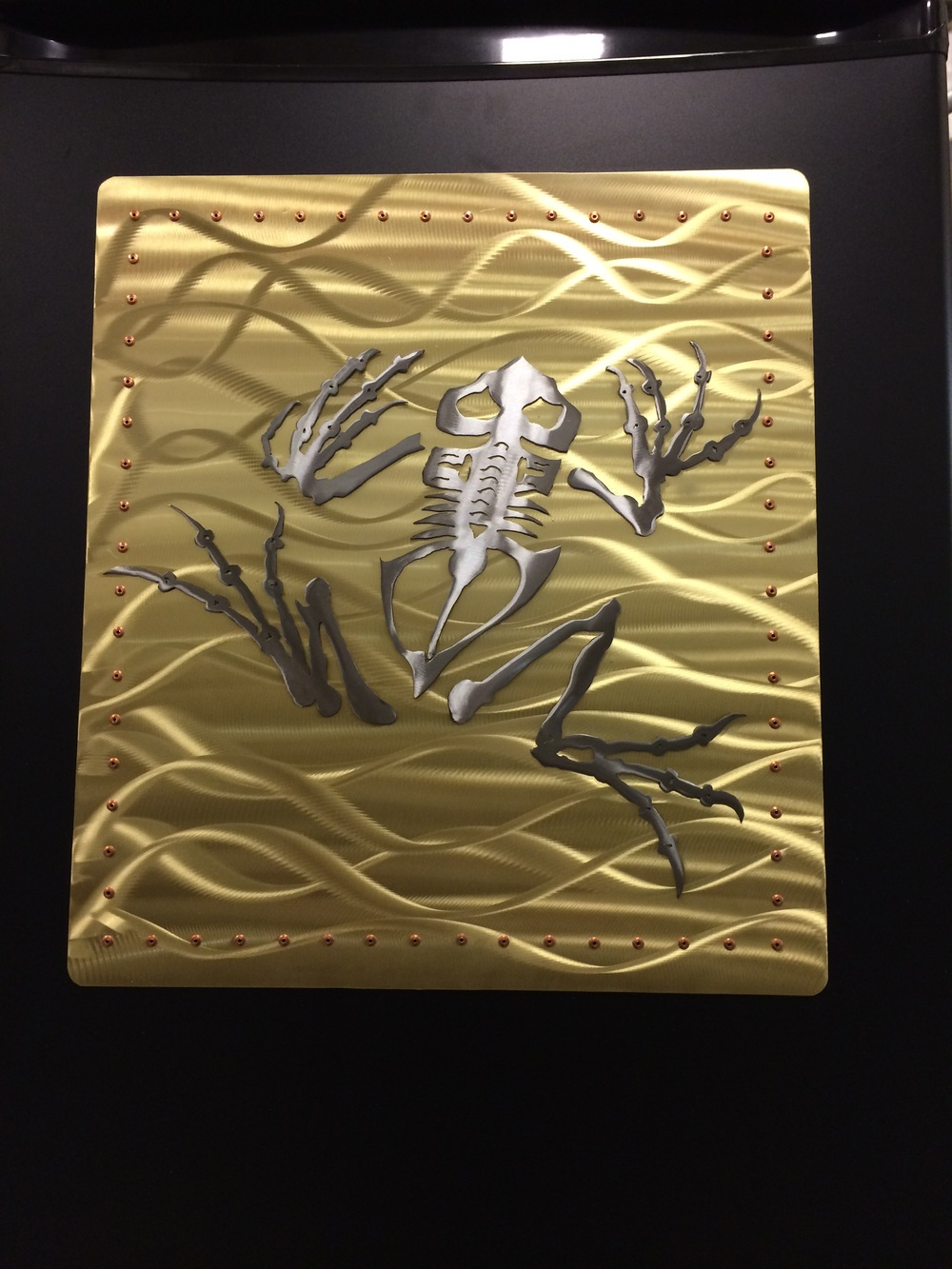 Frog Skeleton for US Navy Seal