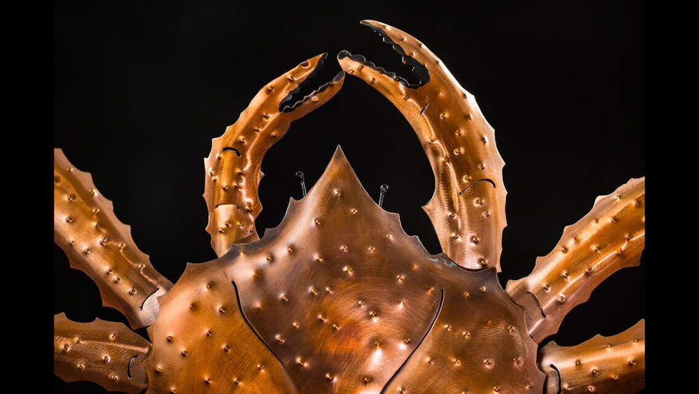 Copper King Crab Closeup