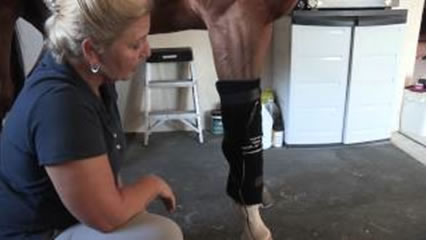 Trainer keeps thoroughbred race horses in top shape with Light Therapy.