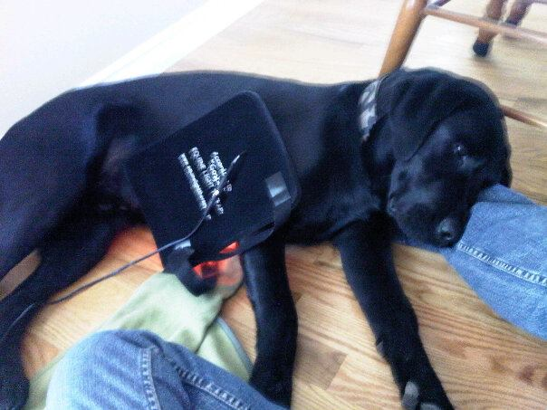 Canine Light Therapy pad helps pulled muscles heal fast.