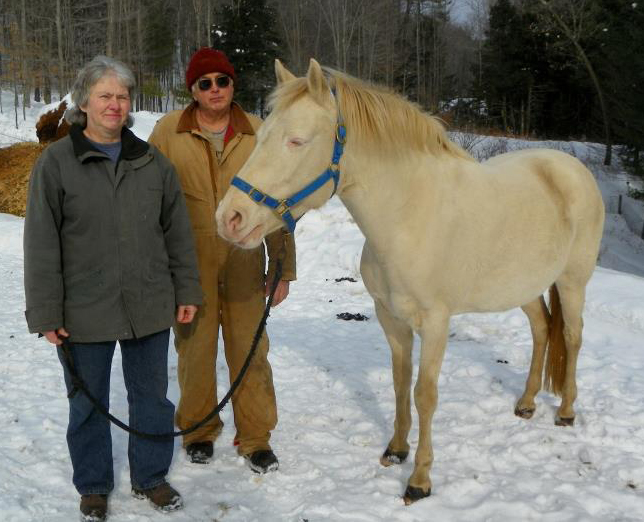 Paso Fino's double founder heals dramatically with Equine Light Therapy.