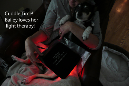 Copy of Bailey's treatment with Canine Light Therapy