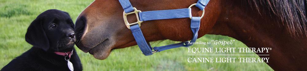 horse_dog.jpeg