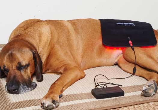 """Gospel's"" Large Light Therapy pad, great for hips"