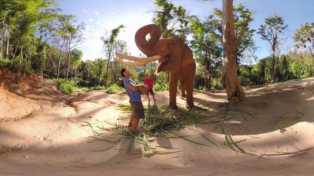 Feeding Elephant 16x9.jpg