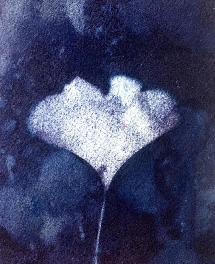 Wet cyanotype + ginkgo leaf