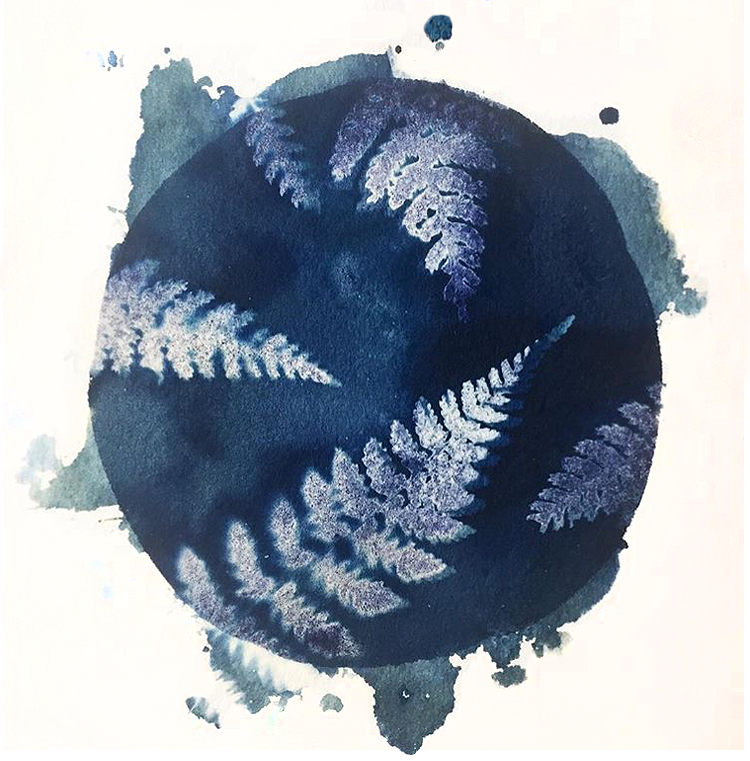 Wet cyanotype, ferns