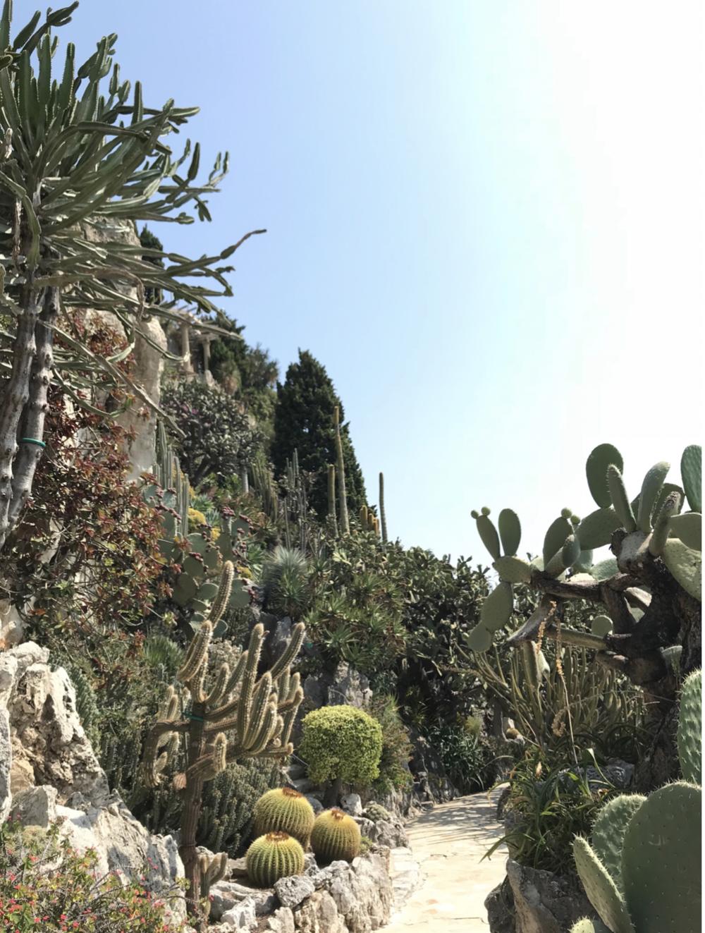 Le Jardin Exotique, Monaco