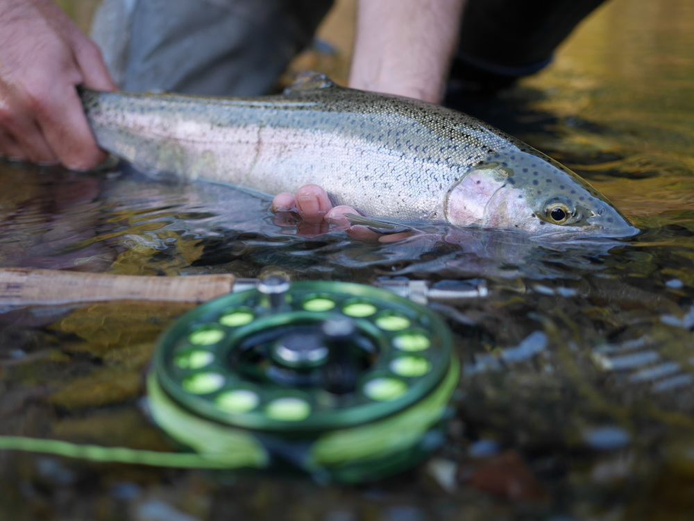 baetis-and-stones-steelhead-season-14.jpg