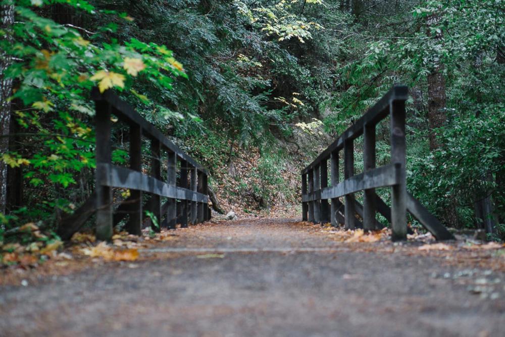 baetis-and-stones-redwood-ride-3.jpg