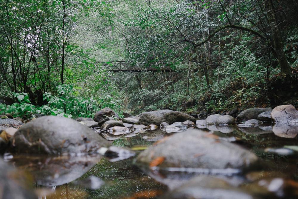baetis-and-stones-redwood-ride-6.jpg